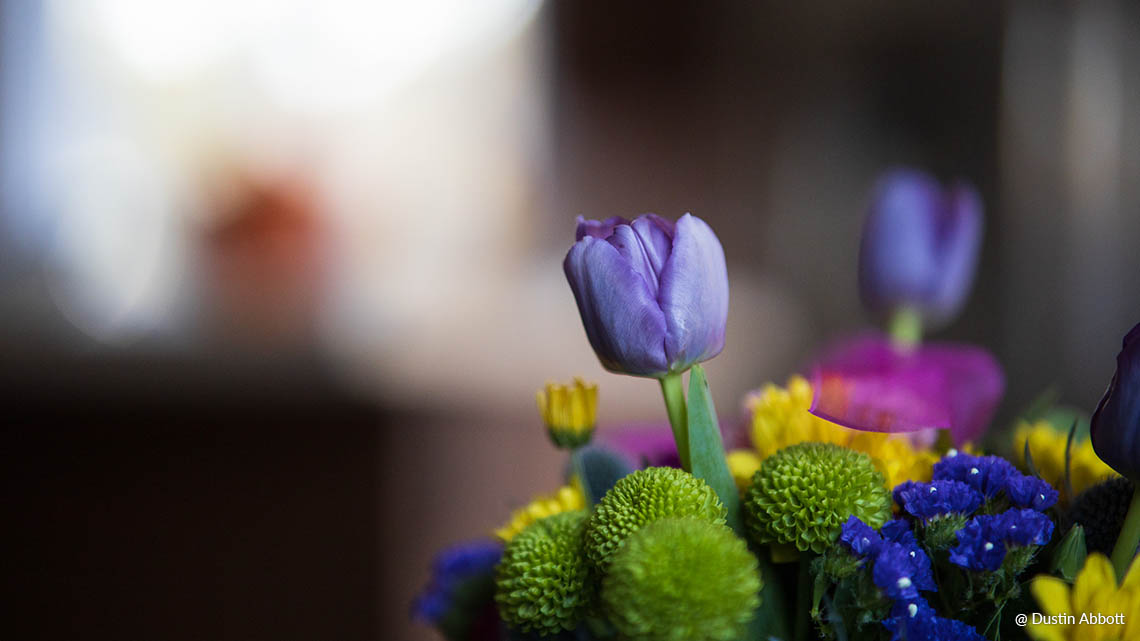 Samyang AF 85mm F1.4 RF Lens (for Canon RF) - Smooth and Dreamy Bokeh